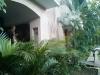 Tropische Pflanzen inmitten der Stadt